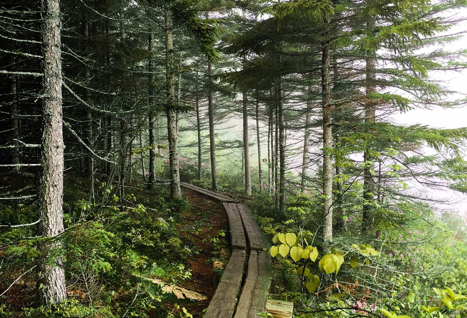 Wooden plank trail at Acadia National Park