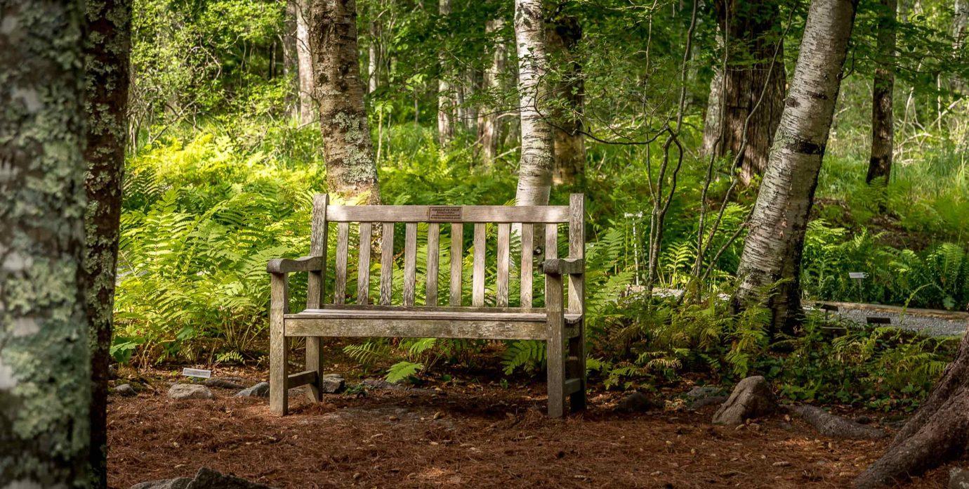 Bench at Acadia National Park