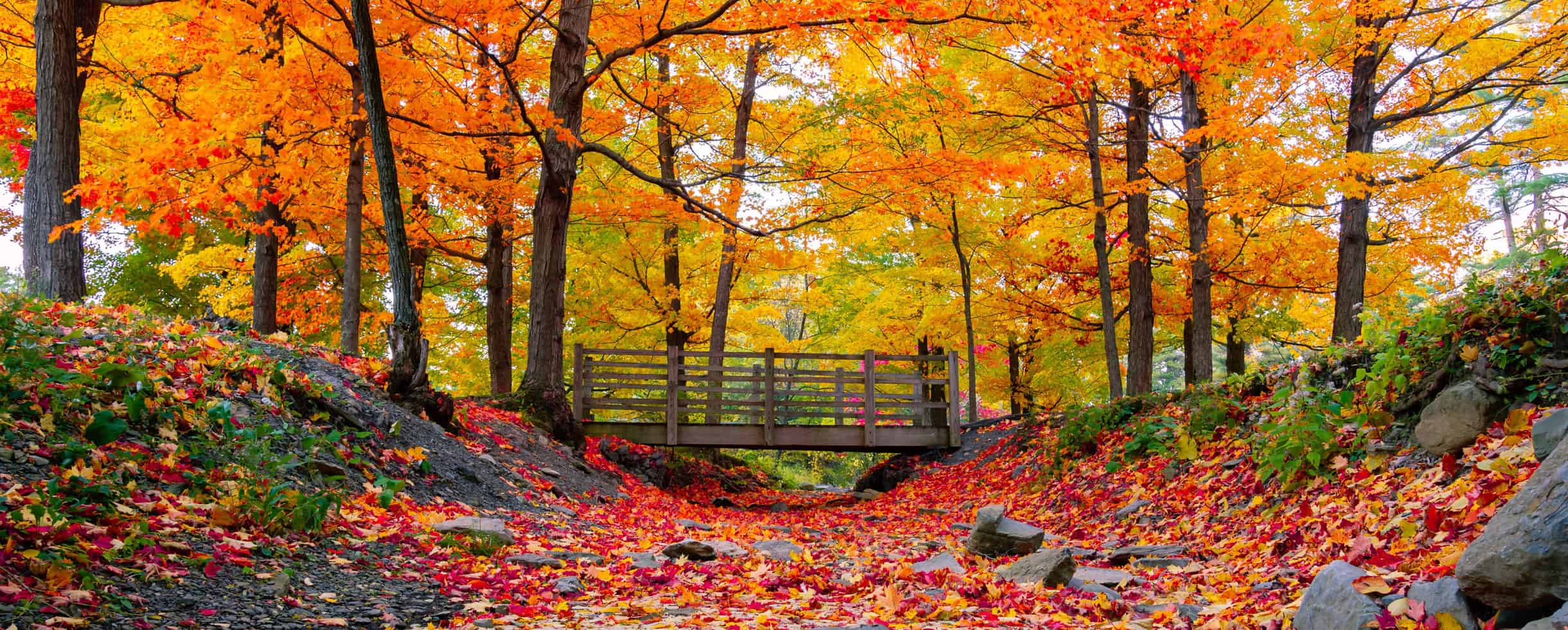 Autumn leaves and a bridge over a dry creek bed