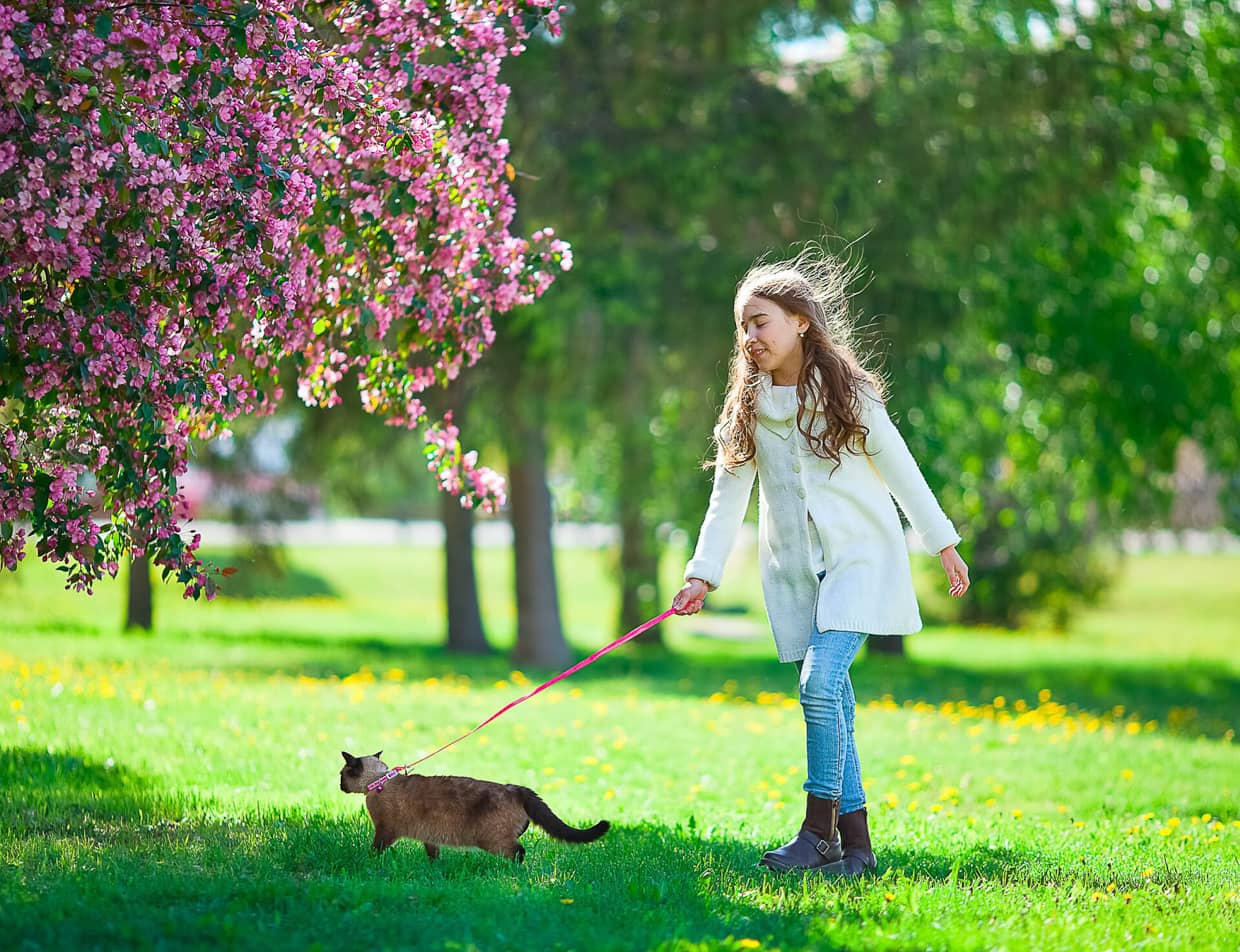 Woman walking cat in a grassy field on a leash